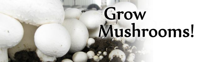 Growing Mushrooms!